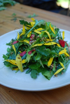 Salad of ox eye daisy, lettuce and radicchio with wildflower petals